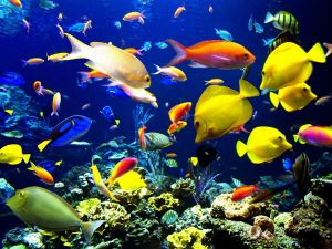 Underwater-Photography-Images-8